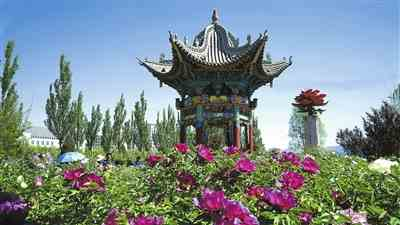相约河州大地共享国色天香——临夏市第二届河州牡丹文化节掠影