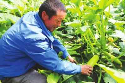 移民村靠菜篮子发家致富设施农业带动榆川村走上小康路