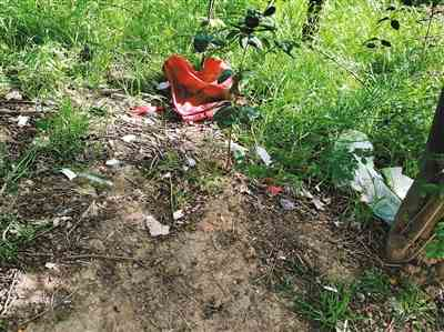 杂草疯长也没人修 里面还有各种垃圾 市民希望北二环东段这片绿地别成卫生死角