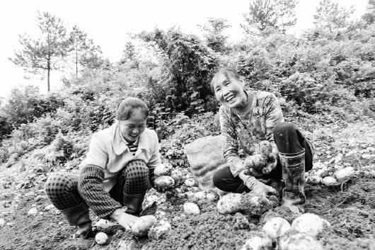 """滕州市马铃薯""""长成""""重庆丰都"""